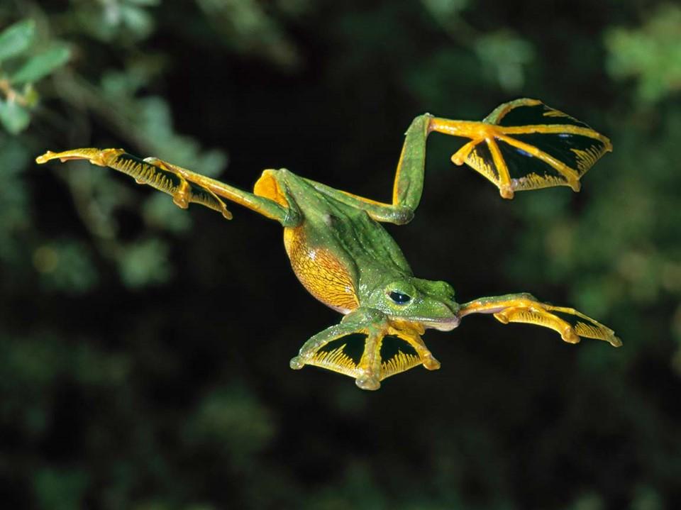 צפרדע מרתפת